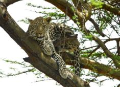 leopard wildlife photography tour