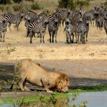 HEART of AFRICA Tour Wildlife at Waterhole