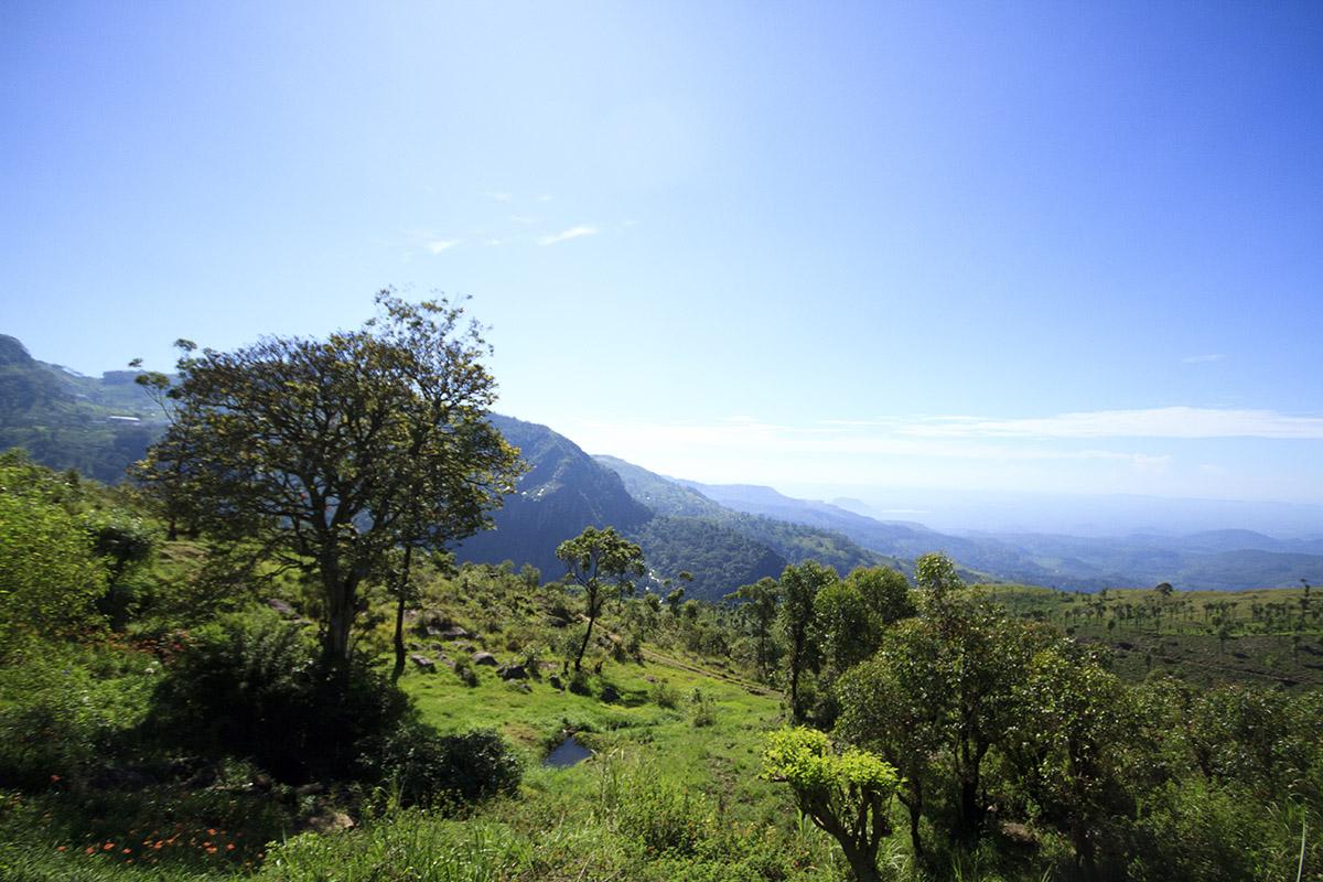 Sri Lanka DotM 002