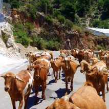 Andalusia Destination GASTRONOMY (Andalusian Goats)